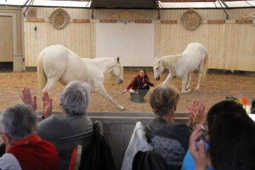Manäge-chevaux-min